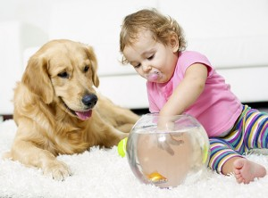 Chem dry carpet cleaning safe for your loved ones